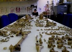 Anwen analysing skeletons from gladiator cemetery