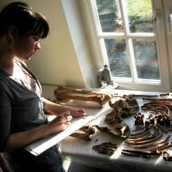 Katie analysing a skeleton